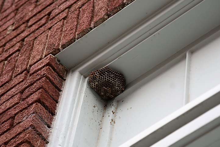 We provide a wasp nest removal service for domestic and commercial properties in Hampstead.